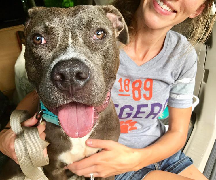 Dog Adopted